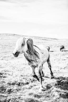 Sanna Kostamon Wild & free kuvasarjan villihevonen