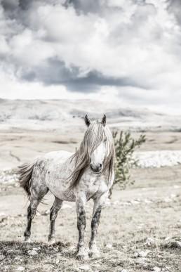 Sanna Kostamon Wild anf free kuvasarjan villihevonen