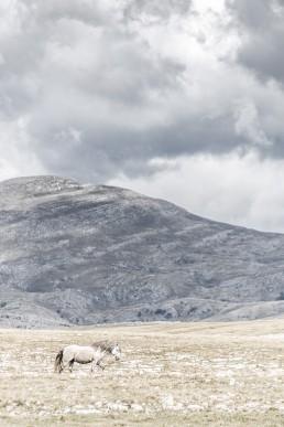 Yksinäinen villihevonen vuoristomaisemassa