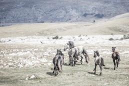 Sanna Kostamon Wild anf free kuvasarjan villihevoslauma