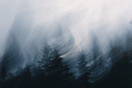 Metsä jossa liike-epätervävyyttä