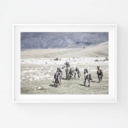 Sanna Kostamon Wild & free kuvasarjan hevosjuliste villihevoslaumasta