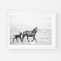 Sanna Kostamon Wild & free kuvasarjan mustavalkoinen villihevosjuliste emästä ja varsasta