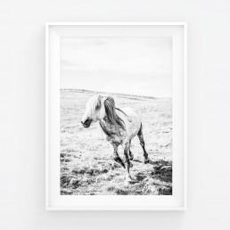 Sanna Kostamon Wild & free kuvasarjan villihevosjuliste