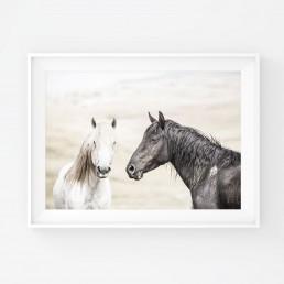 Sanna Kostamon Wild & free kuvasarjan hevosjuliste mustasta ja valkoisesta villihevosesta