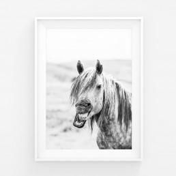 Sanna Kostamon Wild & free kuvasarjan naurava hevonen
