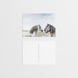 Wild and free villihevospostikortit / Sanna Kostamo