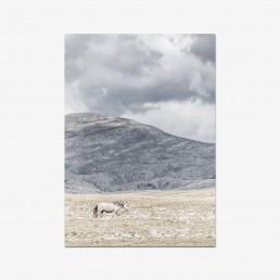 Sanna Kostamon Wild & free kuvasarjan postikortti yksinäisestä villihevosesta vuoristomaisemassa