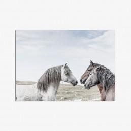 Sanna Kostamon Wild & free kuvasarjan postikortti villihevosista