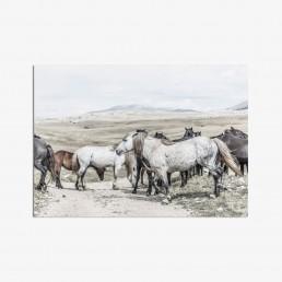Sanna Kostamon Wild & free kuvasarjan postikortti villihevoslaumasta vuoristomaisemissa