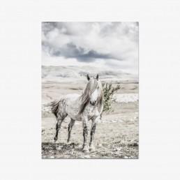 Sanna Kostamon Wild & free kuvasarjan postikortti villihevosesta