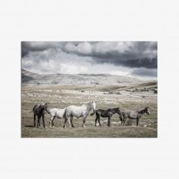 Sanna Kostamon Wild & free kuvasarjan postikortti villihevosista vuoristomaisemissa
