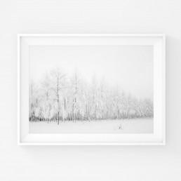 Mustavalkoinen minimalistinen juliste talvissesta huurteisesta koivikosta
