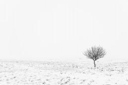 Minimalistinen mustavalkokuva, jossa yksinäinen puu lumisessa maisemassa