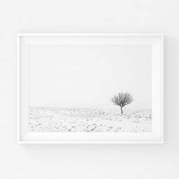 Mustavalkoinen juliste, jossa yksinäinen puu lumisessa minimalistisessa maisemassa