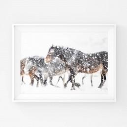 Juliste villihevosista lumimyrskyn keskellä