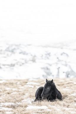 Villihevosvarsa makaa maassa vuoristossa Livnossa