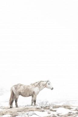 Valkoinen villihevonen usvamaisemassa vuoristossa