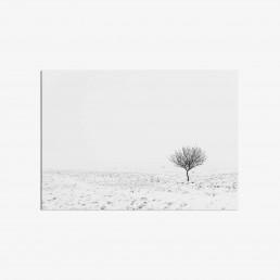 Taulu yksin viihtyvästä puusta talvisessa minimalistisessa maisemassa
