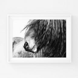 Lähikuva hevosen turvasta harjas silmillä