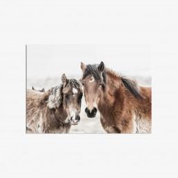 Hevostaulu villihevosystävyksistä yhdessä